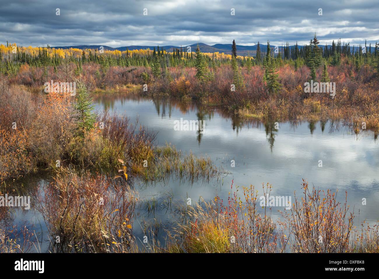 Colores de otoño en el bosque boreal en la ruta de la Plata cerca de Mayo, territorios de Yukón, Canadá Imagen De Stock