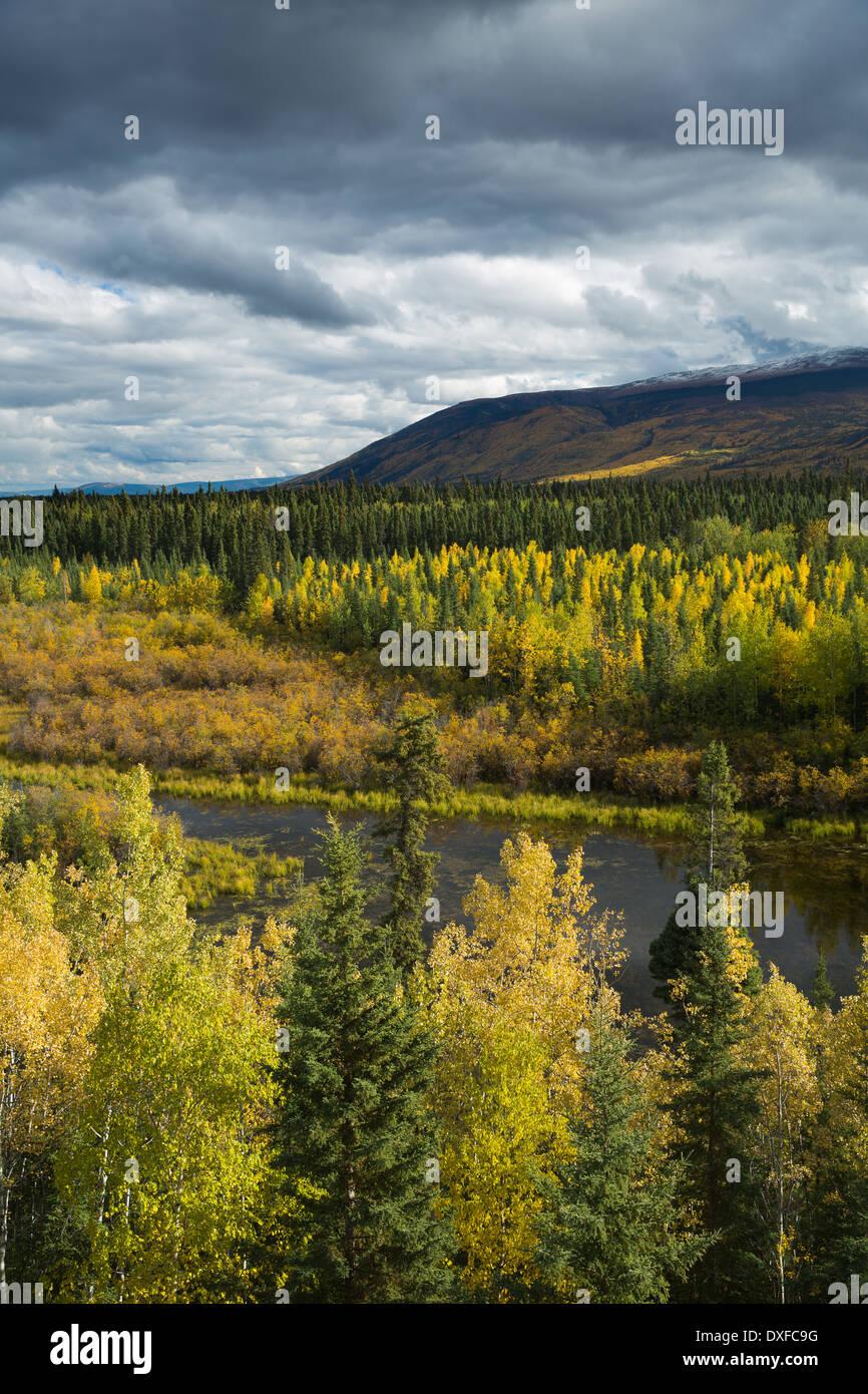 Colores de otoño del bosque boreal en el valle del río Stewart, los Territorios del Yukón, Canadá Foto de stock