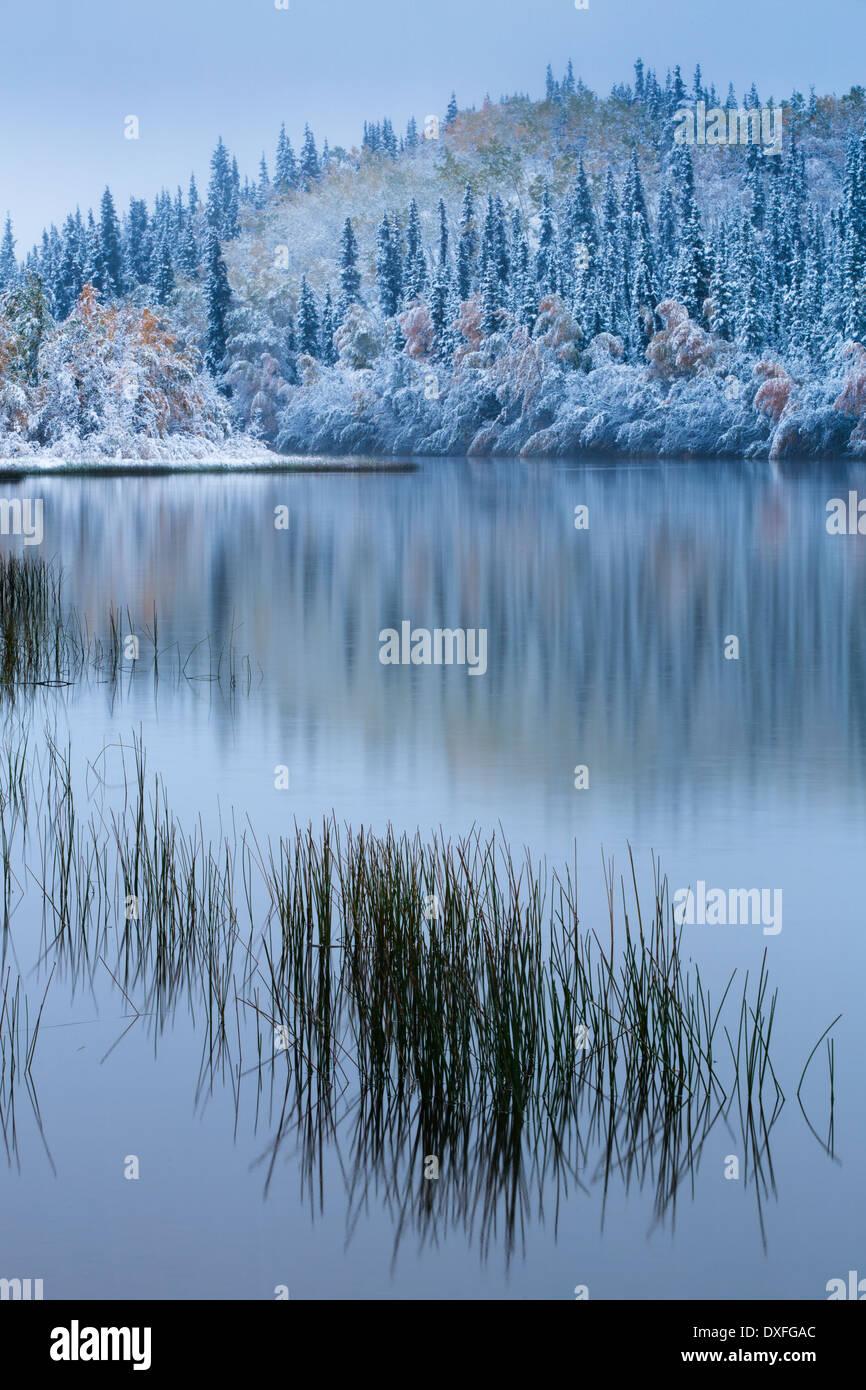 Los colores de otoño y la primera nevada en el lago de cinco millas. Estela Plateada, territorios de Yukón, Canadá Foto de stock