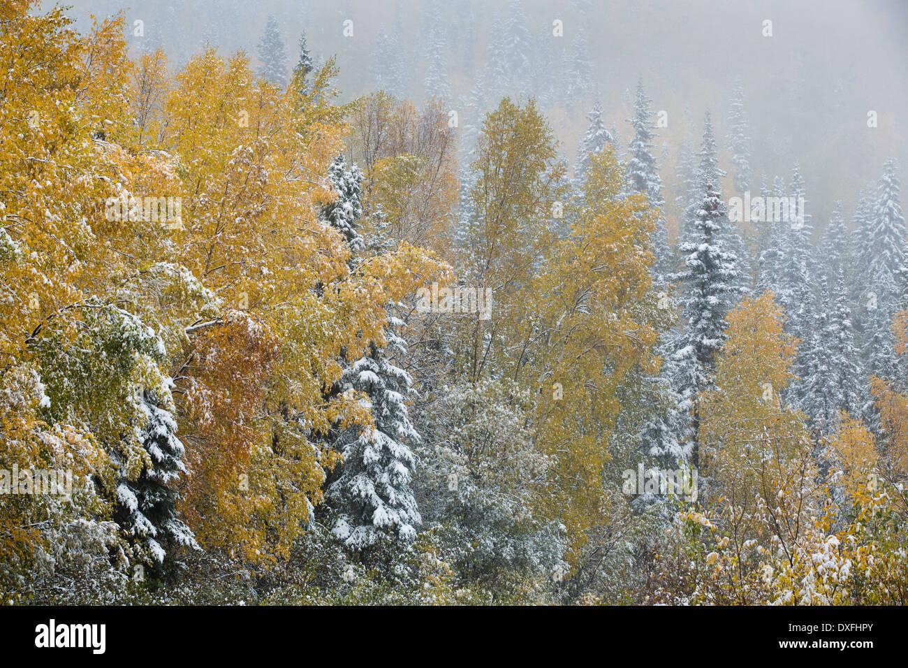 Primeras nieves y colores de otoño en la ruta de la Plata nr Mayo, territorios de Yukón, Canadá Imagen De Stock