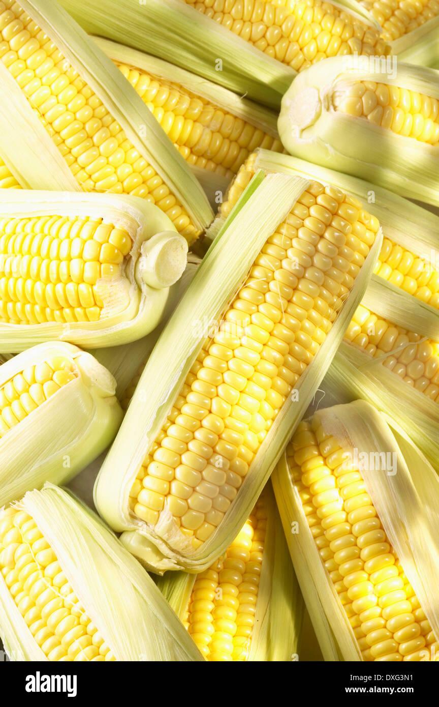 Fotograma completo recién elegido de la mazorca de maíz Imagen De Stock