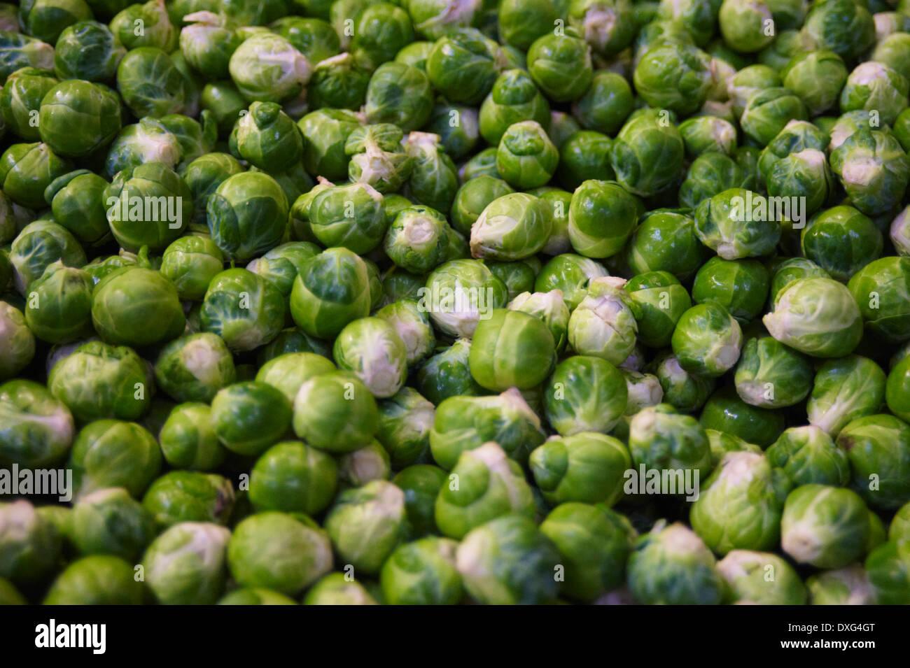 Fotograma completo de cosechadas las coles de Bruselas Imagen De Stock
