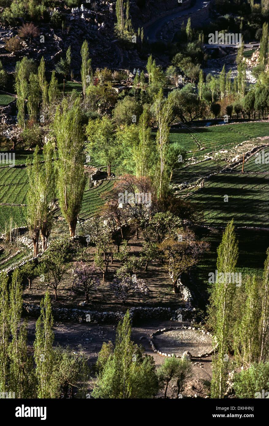 Ladakh Primavera Exuberantes árboles Verdes Campos De Cebada