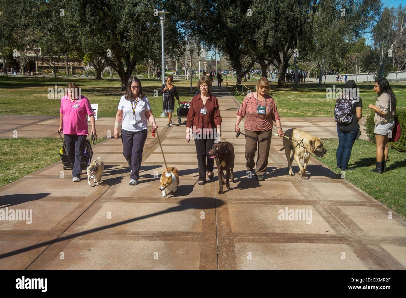 Los propietarios de voluntarios traen a sus perros especialmente entrenados comodidad a la Universidad de California en Riverside para aliviar el estrés del estudiante Imagen De Stock