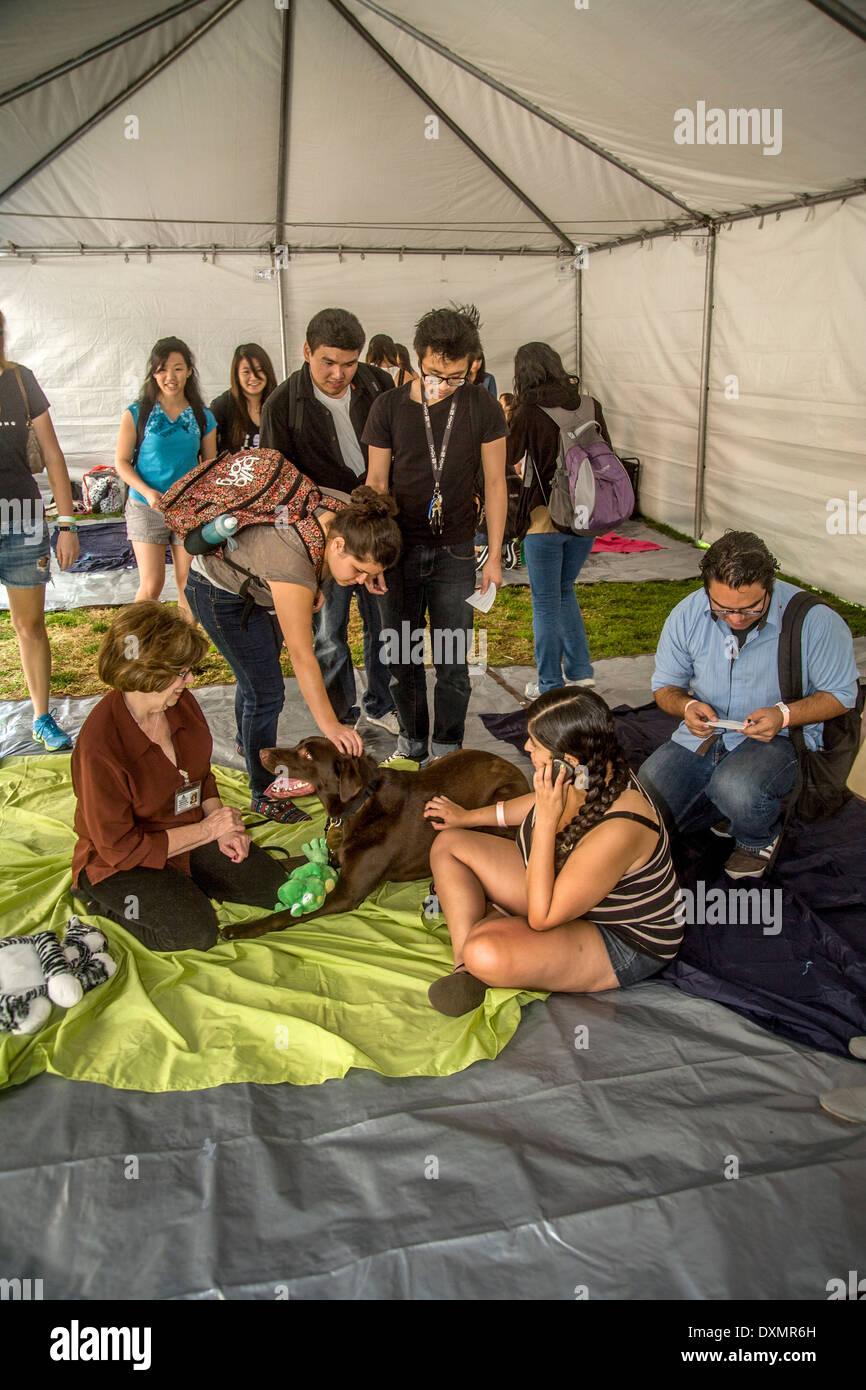 Durante los exámenes finales de la Universidad de California en Riverside estudiantes alivie el estrés acariciar a perros especialmente entrenados confort Imagen De Stock