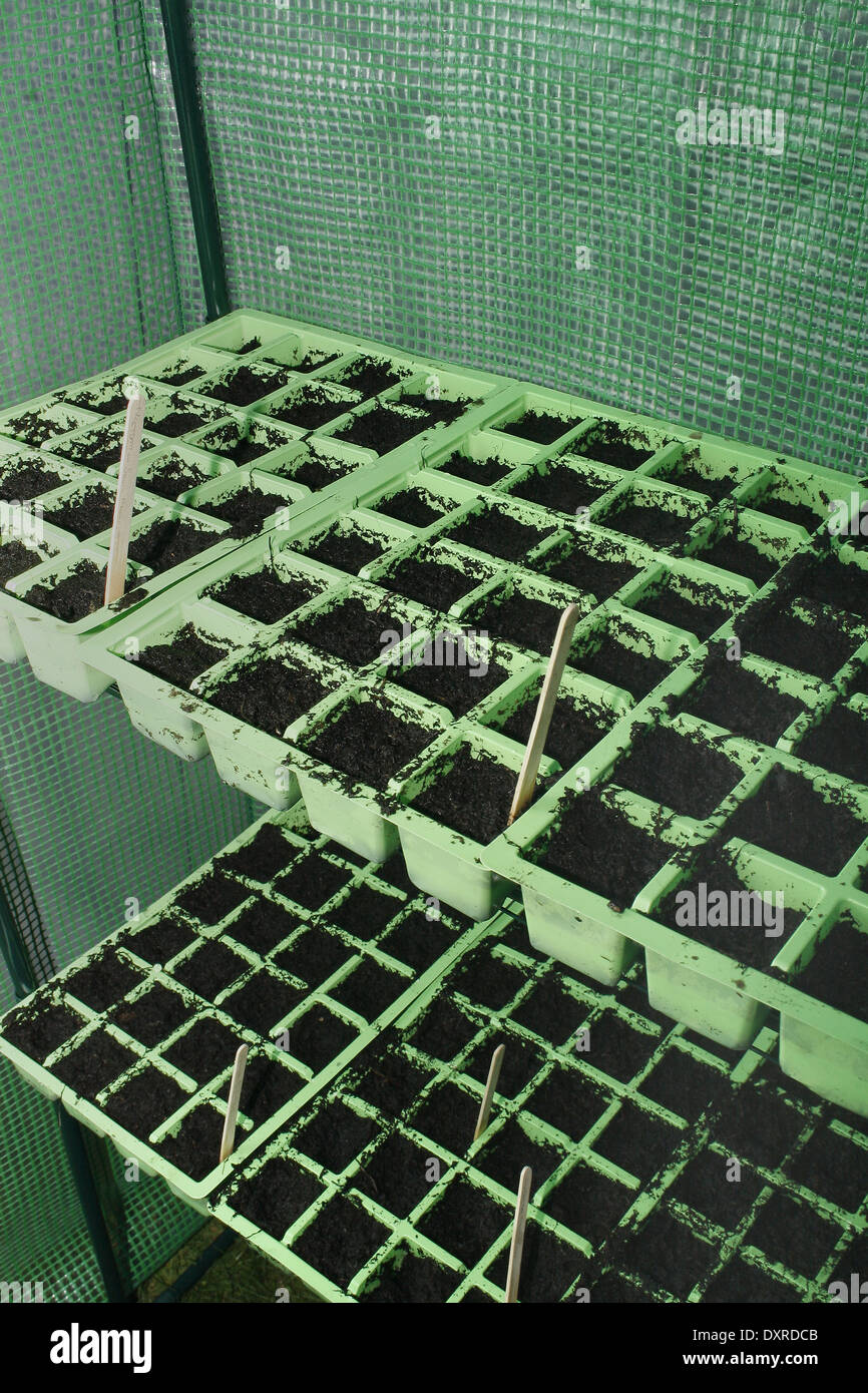 Módulos De Semillas Llenas De Compost En Invernadero De