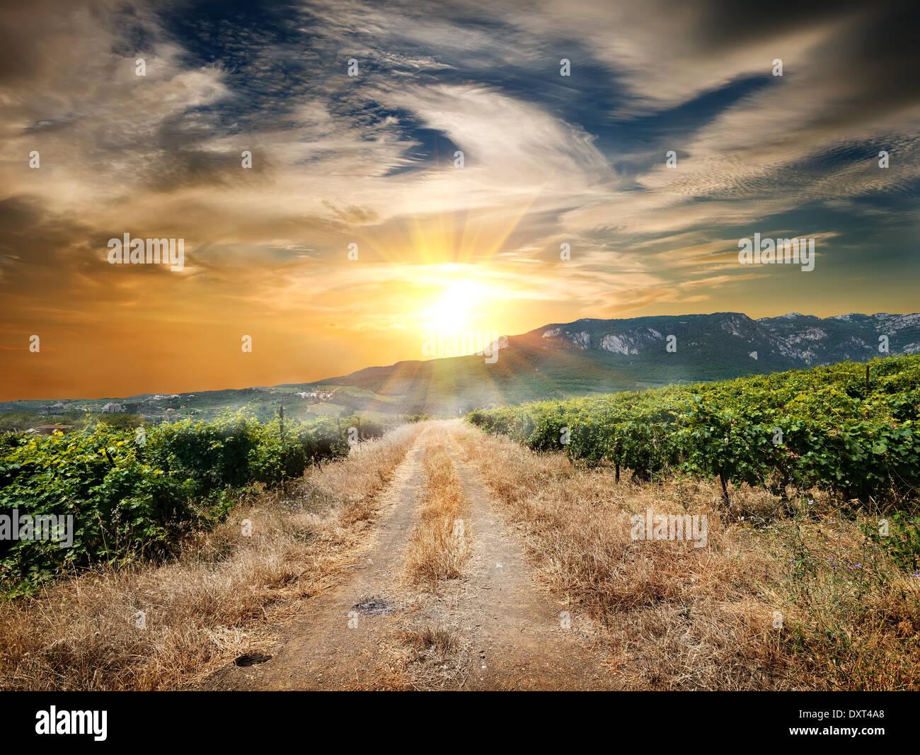 País por carretera a través de un viñedo en otoño Foto de stock