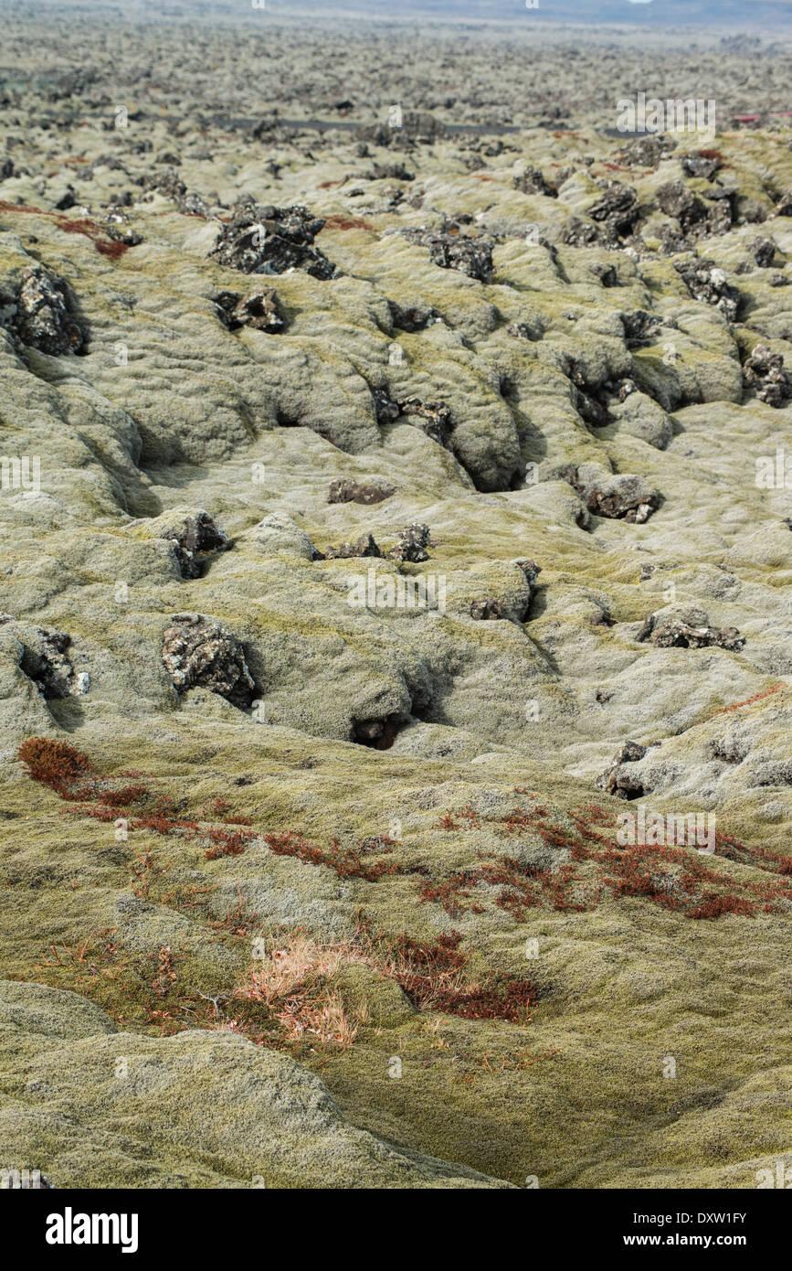 Los musgos y líquenes son los únicos vegetales que pueden colonizar algo reciente paisajes de lava, Islandia Imagen De Stock