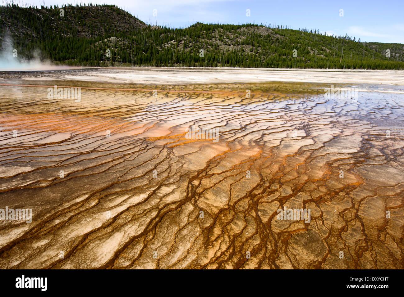 Grand Prismatic Spring, que forma parte de la Cuenca del Géiser de Midway en el Parque Nacional de Yellowstone. Foto de stock