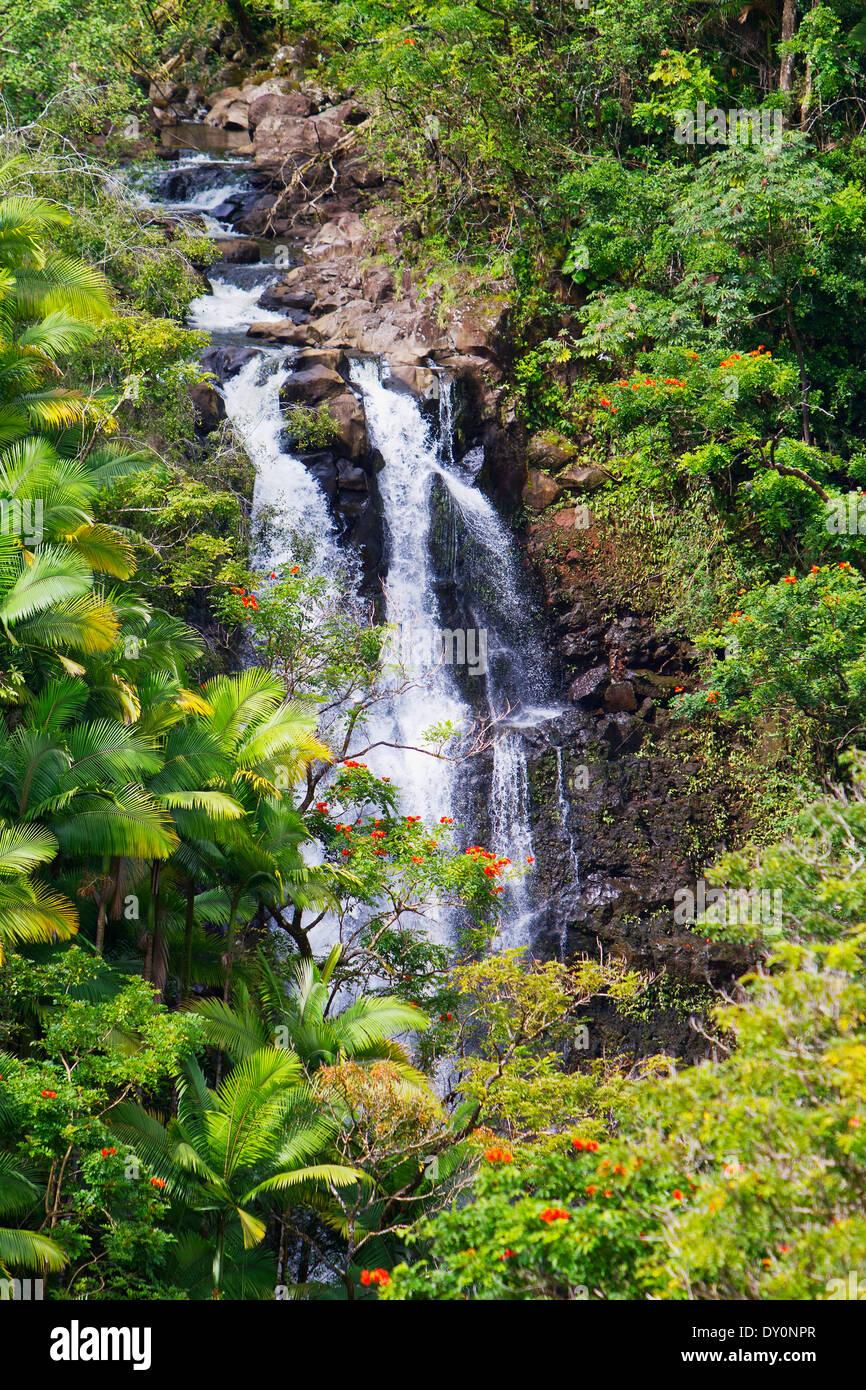 Nanue cascada ubicada en la costa de Hamakua; Big Island, Hawaii, Hawaii, Estados Unidos de América Foto de stock
