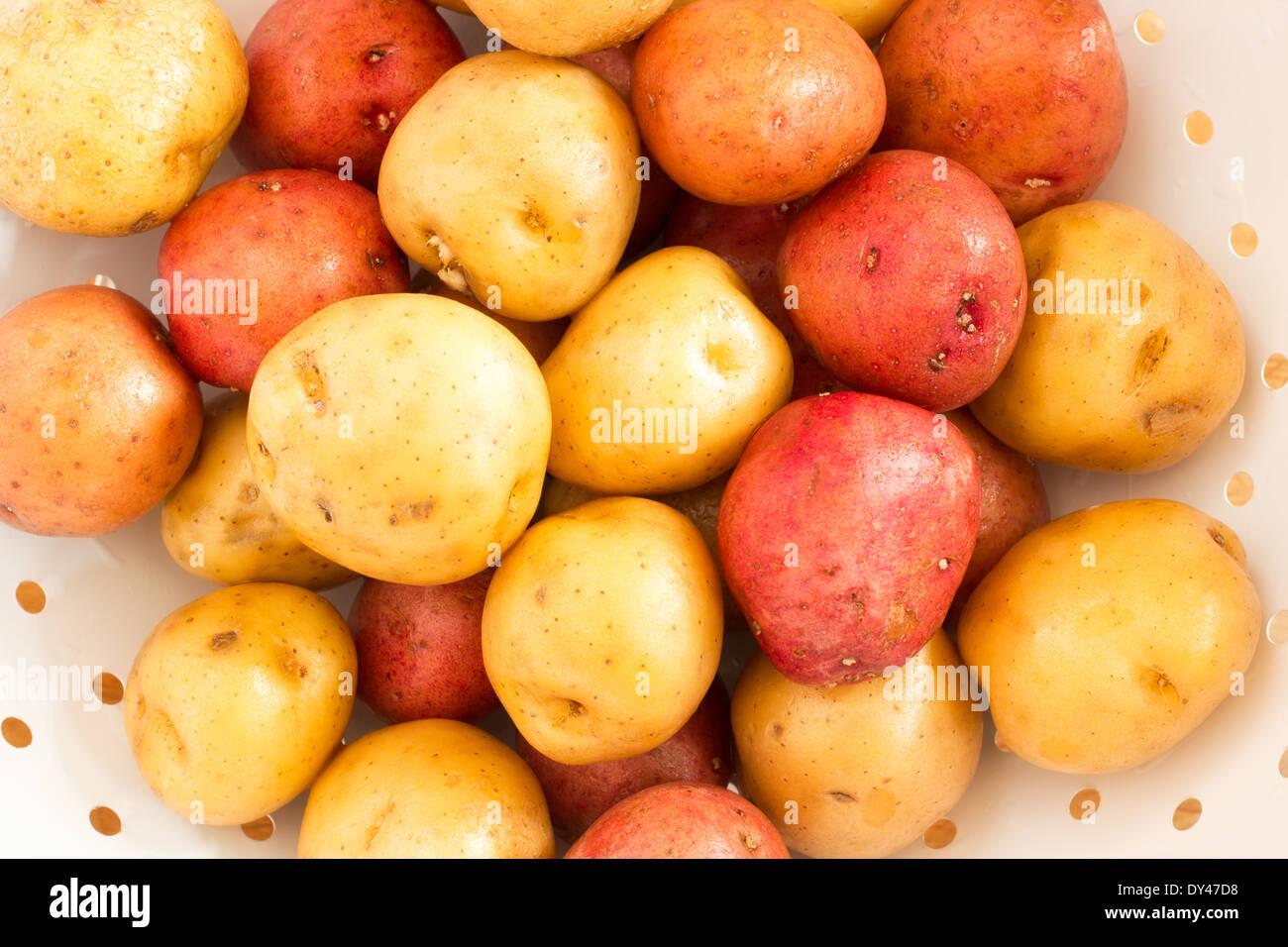 Lavado de oro y rojo bebé patatas en colador blanco Imagen De Stock