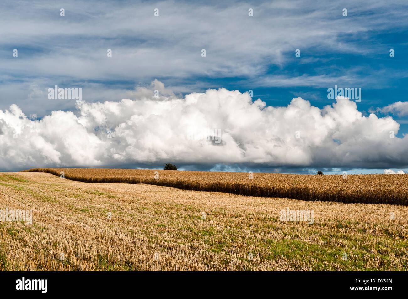 Las nubes cúmulos sobre un campo cortado parcialmente de cebada madura en Stonewall colina cerca de Knighton, Powys Foto de stock