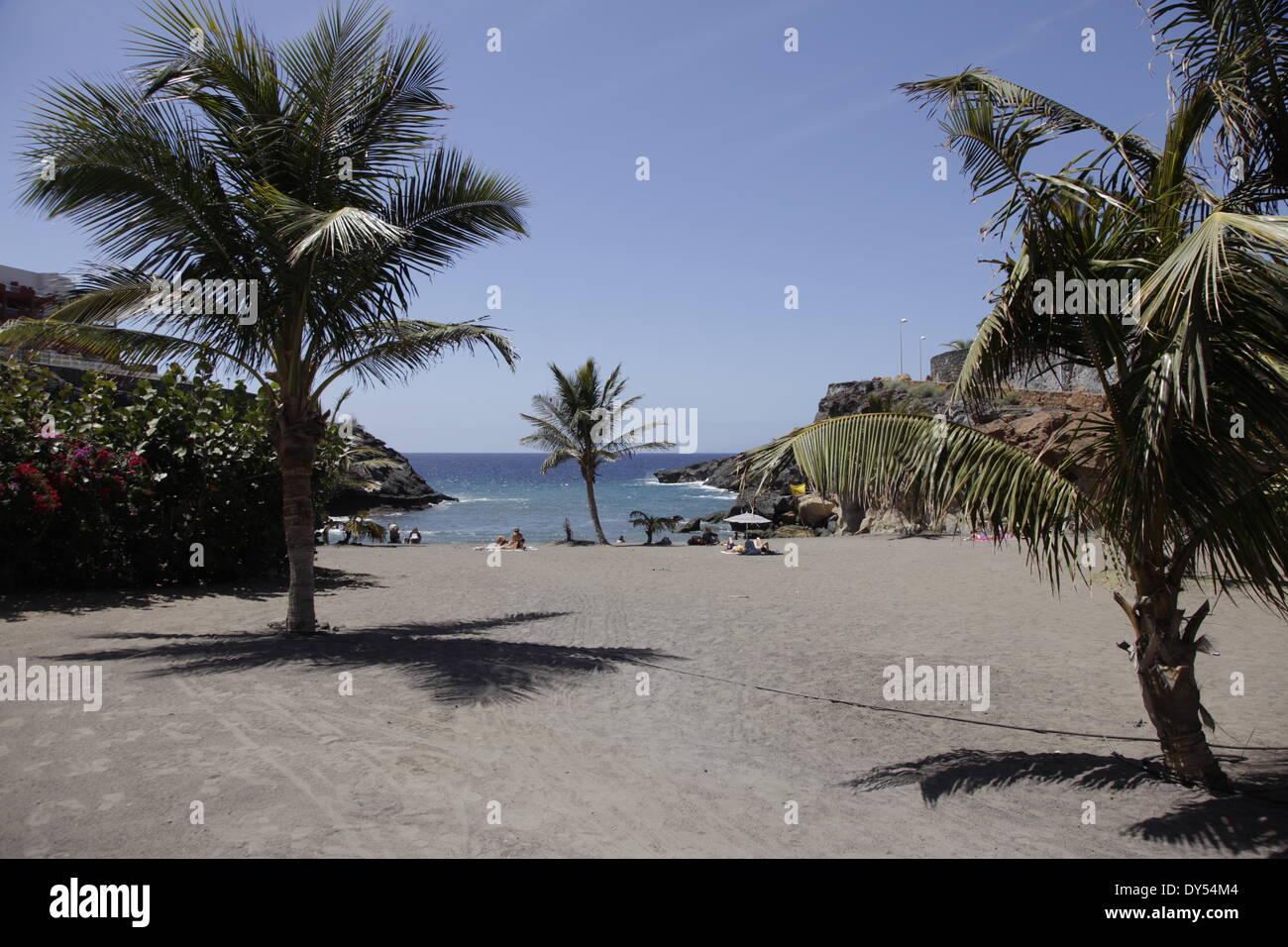 Palmeras en las galgas de playa en Playa de Las Americas, Tenerife, Islas Canarias, España Imagen De Stock