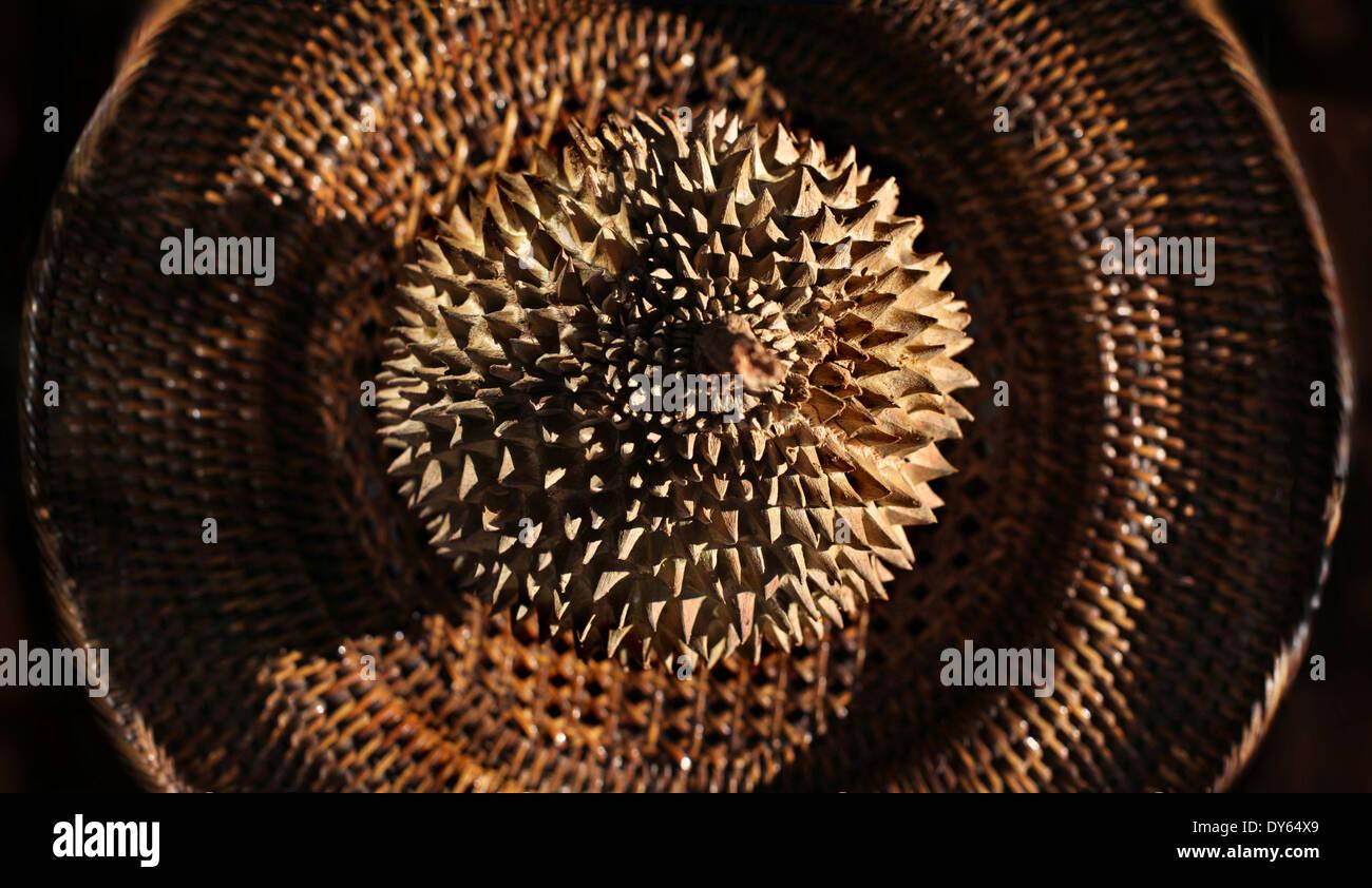 Fruta Durian sobre una placa étnicos, Manila, la isla de Luzón, Filipinas, Asia Imagen De Stock