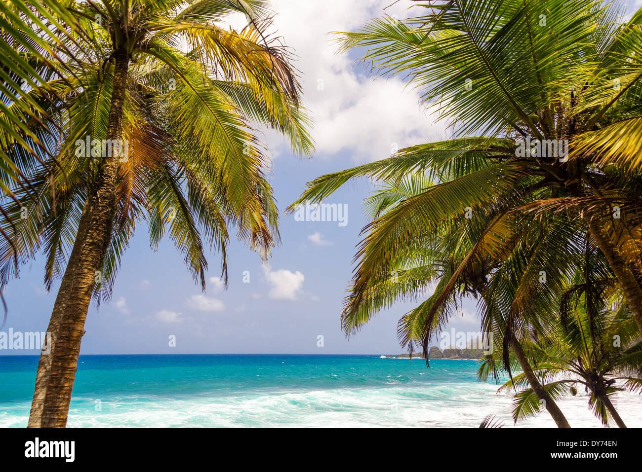 Caribe seascape enmarcadas por palmeras en Capurgana, Colombia Foto ...