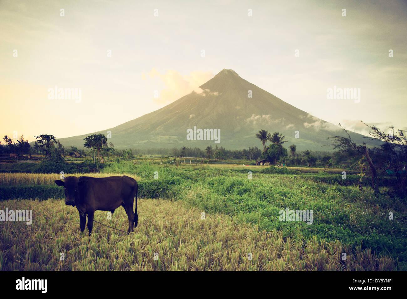 Filipinas, Luzón Souteastern, Bicol, volcán Mayon Imagen De Stock