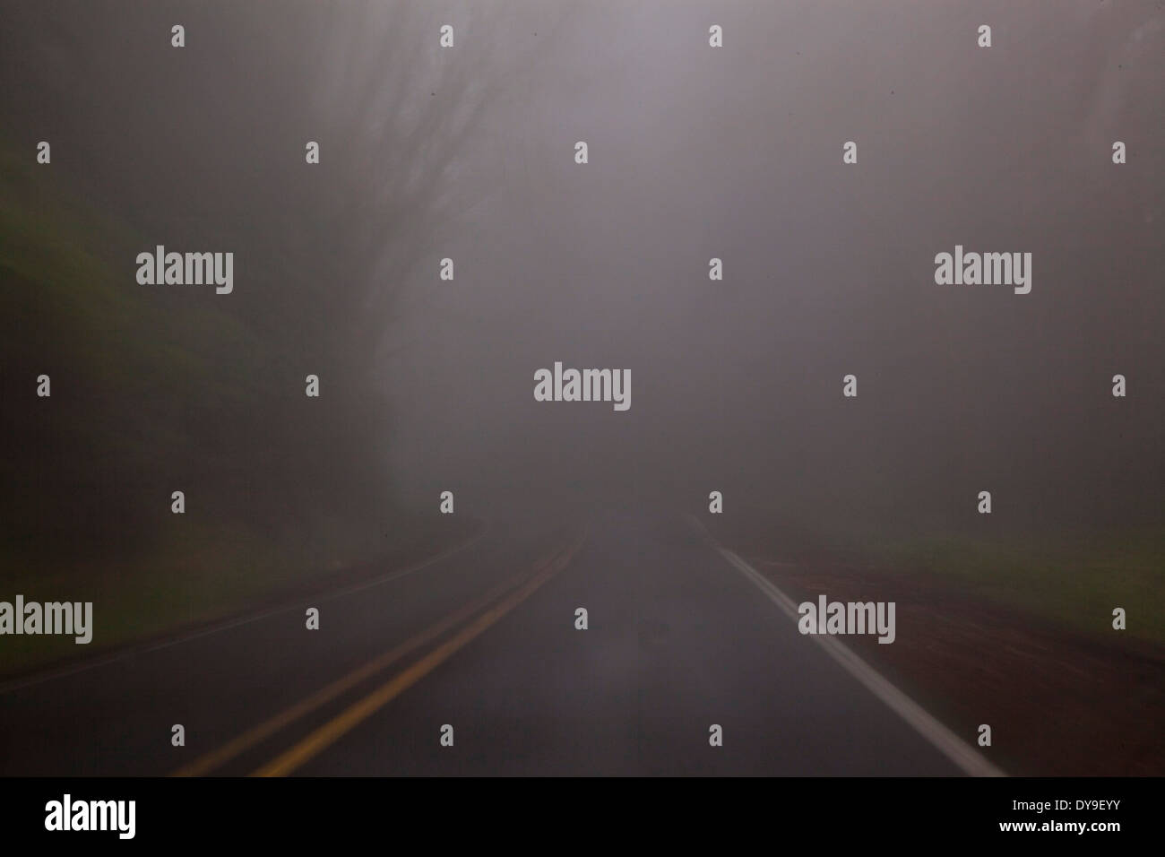 Un oscuro, lluvioso, foggy road, cerca de Cabo Lookout, Costa de Oregón, Estados Unidos Imagen De Stock