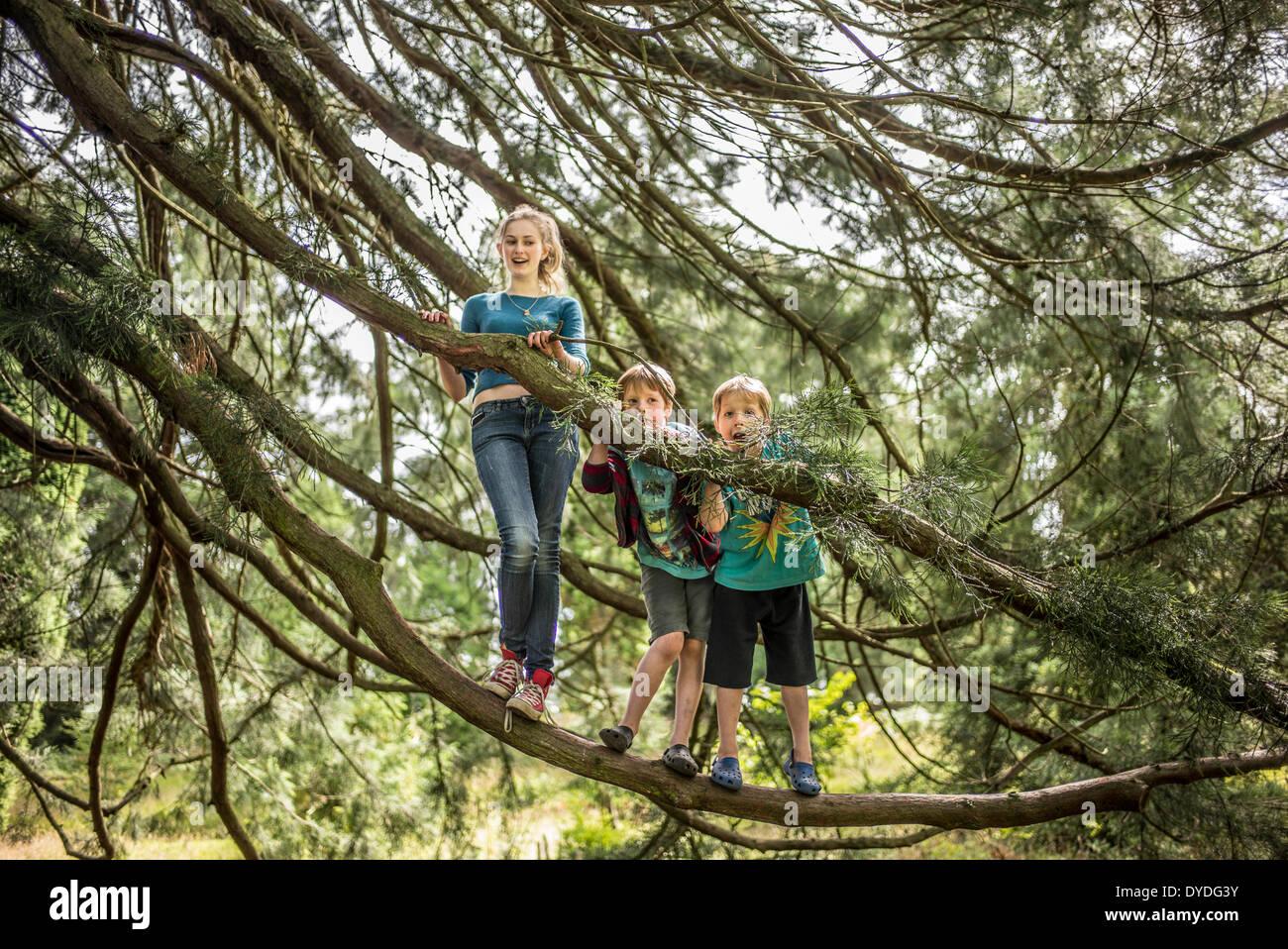 Dos hermanos y su hermana trepar árboles en el bosque. Imagen De Stock