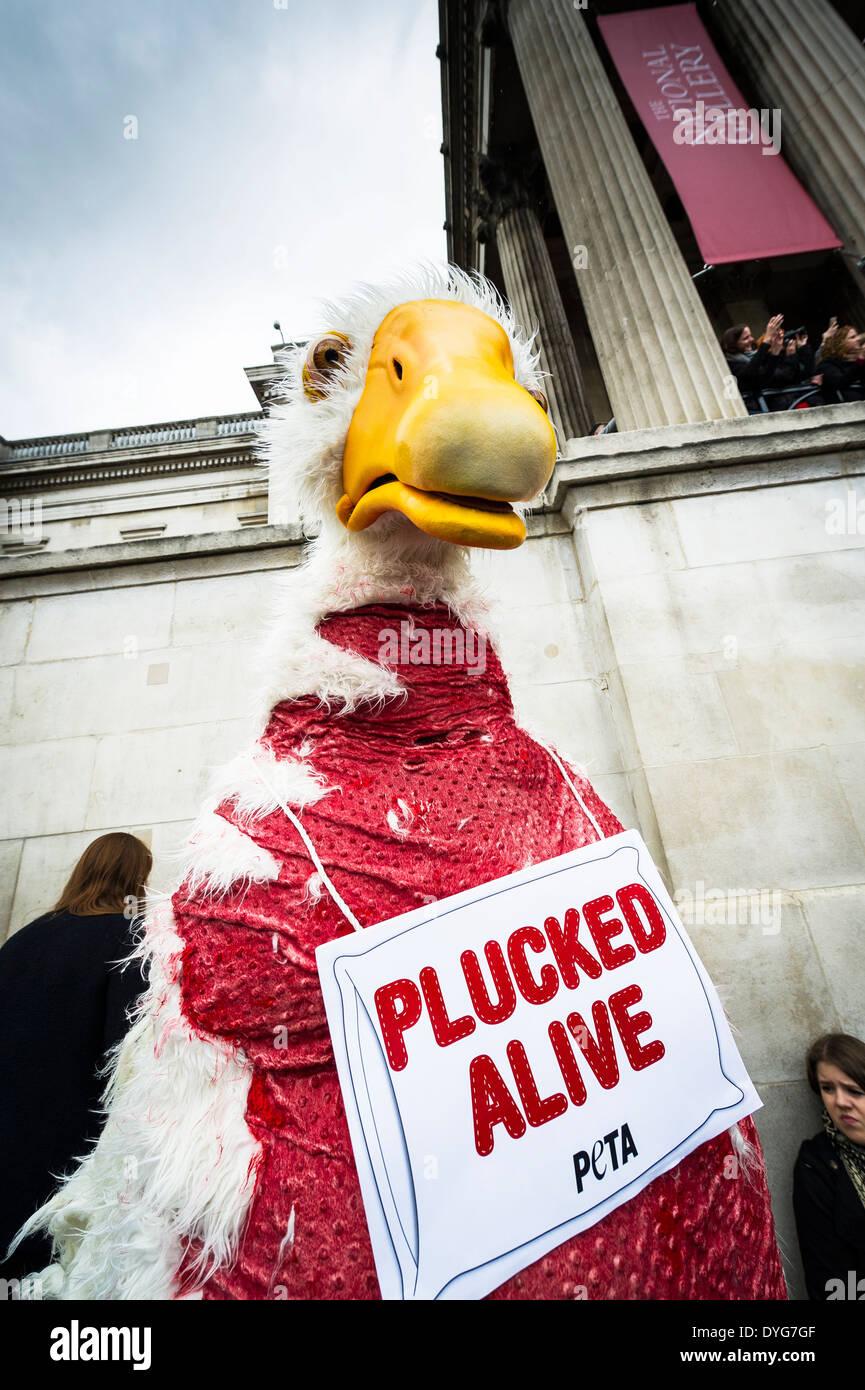 PETA protestando contra el trato inhumano de los animales. Imagen De Stock