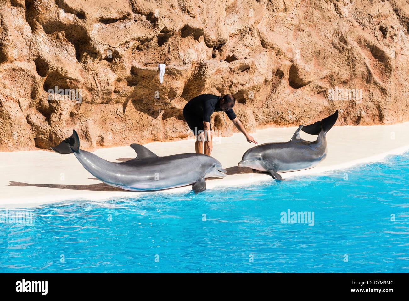 Show de Delfines, zoológico Loro Parque, Puerto de la Cruz, Santa Cruz de Tenerife, Tenerife, Islas Canarias, España Foto de stock