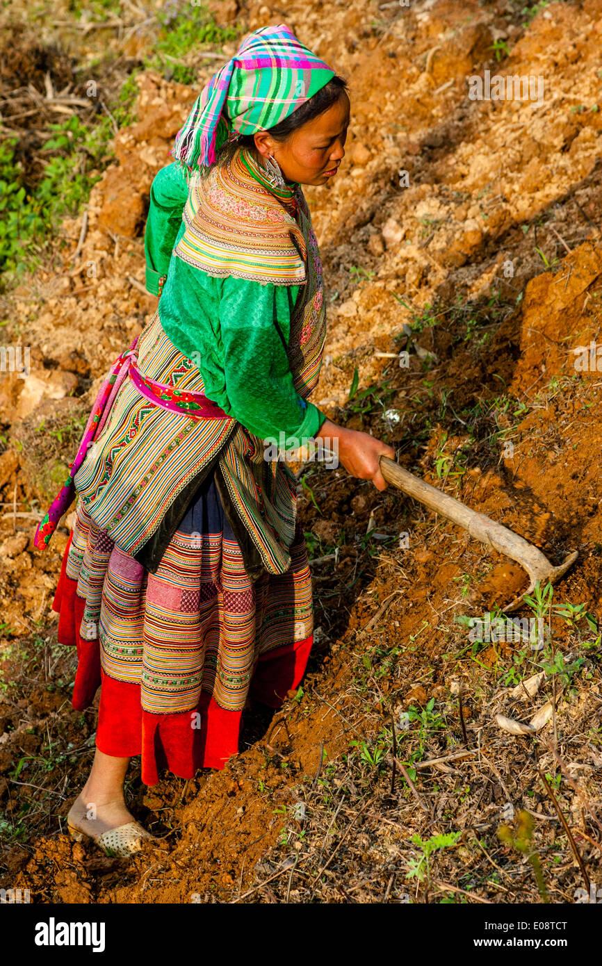 Las mujeres Hmong flor trabajando en los campos cerca de Bac Ha, provincia de Lao Cai, Vietnam Imagen De Stock