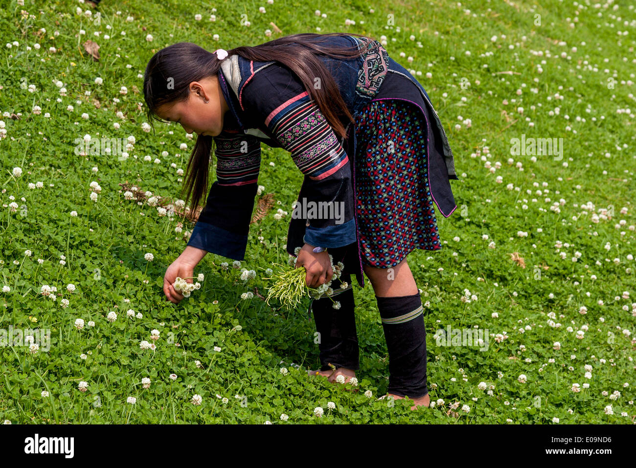 Los niños de la minoría Hmong negro recogiendo flores, Sa Pa, provincia de Lao Cai, Vietnam Imagen De Stock