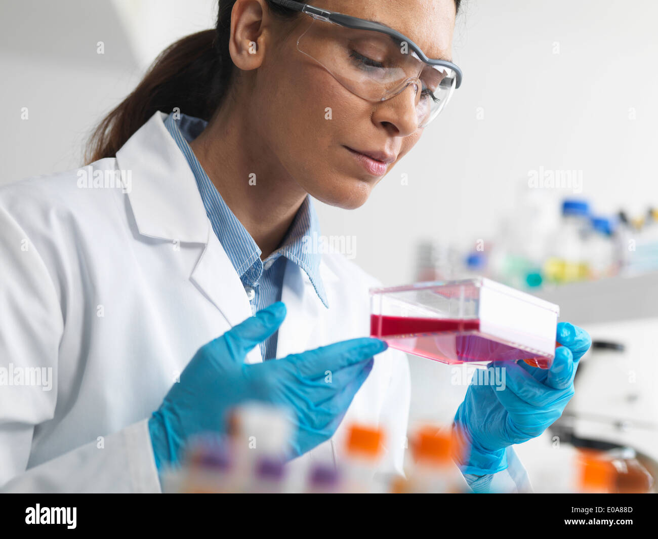 El biólogo celular sosteniendo un matraz conteniendo células madre, cultivadas en rojo el medio de crecimiento, para investigar las enfermedades Imagen De Stock