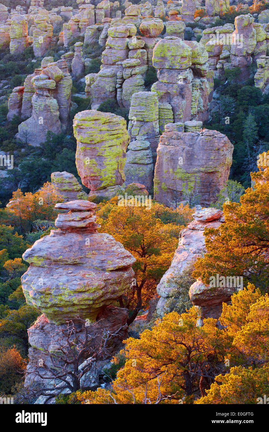 Bonita Canyon Drive, el Monumento Nacional Chiricahua, Arizona, EE.UU., América Imagen De Stock