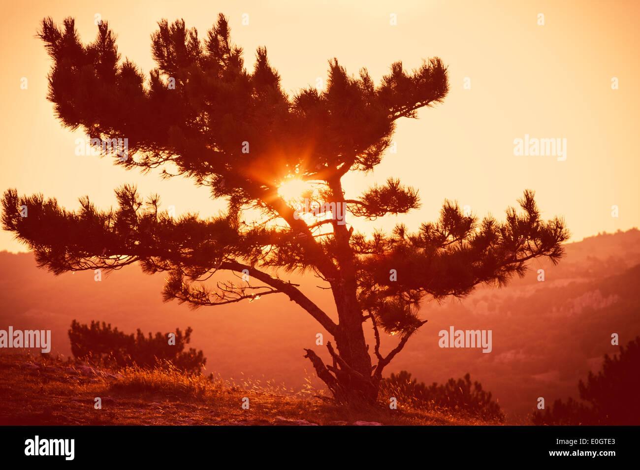 Árbol solitario en la montaña hermosa puesta de sol paisaje Imagen De Stock