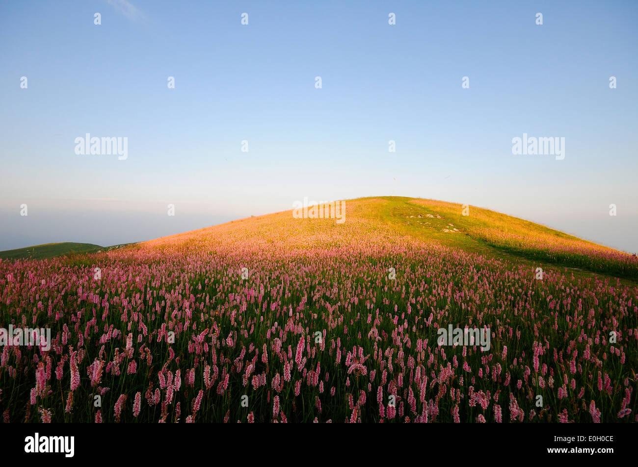 Campo de hierba y flores. Foto de stock