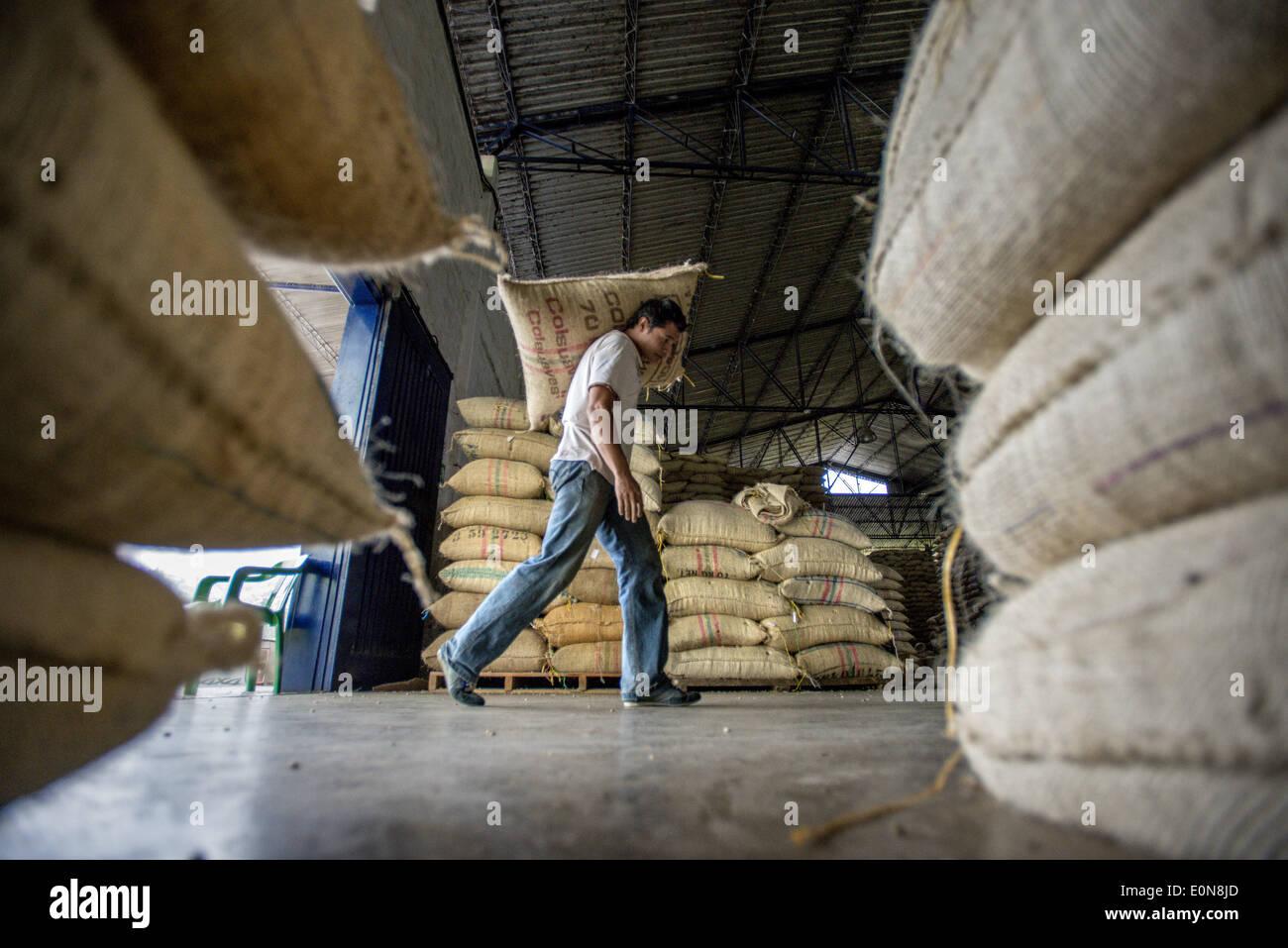 Jardin, Departamento de Antioquia, Colombia. 21 Mar, 2014. Marzo 21, 2014 - Los granos de café a los agricultores locales se llevan a mano como el café procesado y almacenado en todo el mundo envío en un co-op, Coopertiva de Caficultores de Andes en la ciudad de Jardin en el departamento de Antioquia región de Colombia.Story Resumen:.profunda en los verdes valles del departamento colombiano de Antioquia región es Fabio Alonso Reyes Cano finca de café. Finca La Siemeona ha estado en la familia Cano durante generaciones. Él y dos trabajadores de la granja de 5 acres de tierra como sus antepasados, bean por bean. Es una tradición que Imagen De Stock