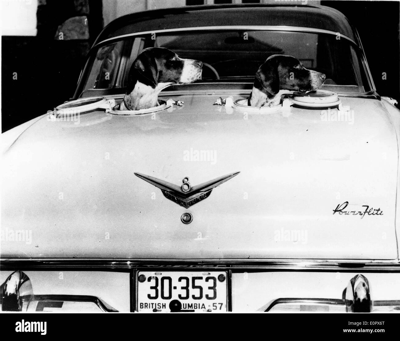 Dos perros pegando sus cabezas de portillas cortados en el coche Imagen De Stock