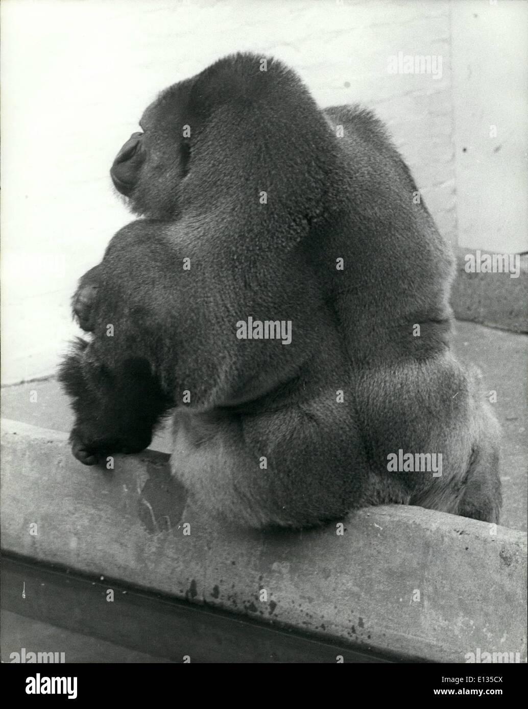 Febrero 26, 2012 - Invierno de descontento: Bukhama, un gorila de dieciséis años de edad en Dudley zoo en las West Foto de stock