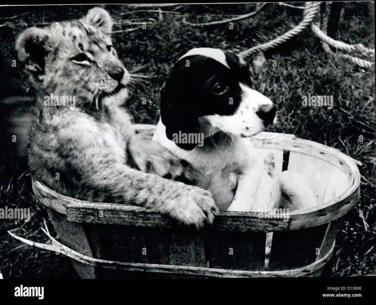 Febrero 29, 2012 - Trance acompañantes: Los mejores amigos, aunque parece difícil elieve son estos dos jóvenes, el blanco y el negro cachorro y él tiger cub. Ellos juegan juntos, tienen sus comidas juntos ud han hecho desde su nacimiento. Por supuesto, las cosas podrían ser diferentes uando el tigre crece. Imagen De Stock
