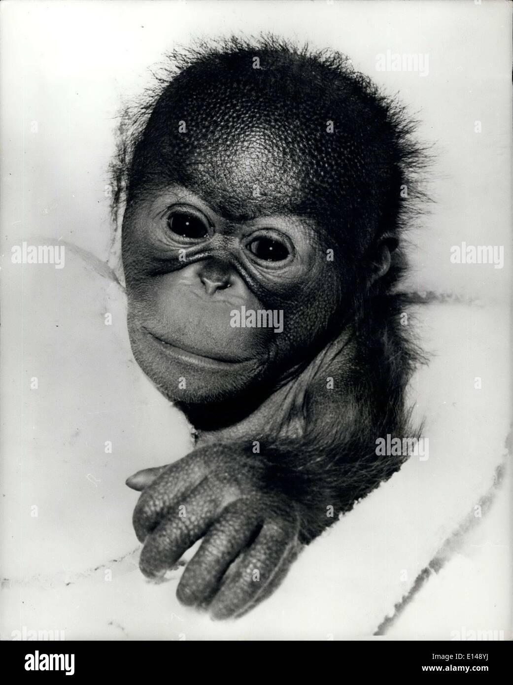 Abril 17, 2012 - abandonados por la madre. Tras una muy celebrado el nacimiento de un 31b. 80z. Bornean orangután, guardianes y funcionarios en el zoológico de San Diego han sido lanzados a las profundidades de la dis-par emocional. ''Chico'', sus apreciadas recién llegado ha sido rechazado por su madre. A pesar de todos los esfuerzos realizados por los funcionarios, el primado de la madre indica que ella no quiere su trasero fuera de la primavera. Pero no todo está perdido. El ''niño'' ha sido colocado en un vivero y criados por manos humanas. Los últimos informes revelan que el chico está haciendo un buen ajuste y visto por última vez cuando estaba teniendo un buen tiempo sólo haciendo el mono. Foto de stock