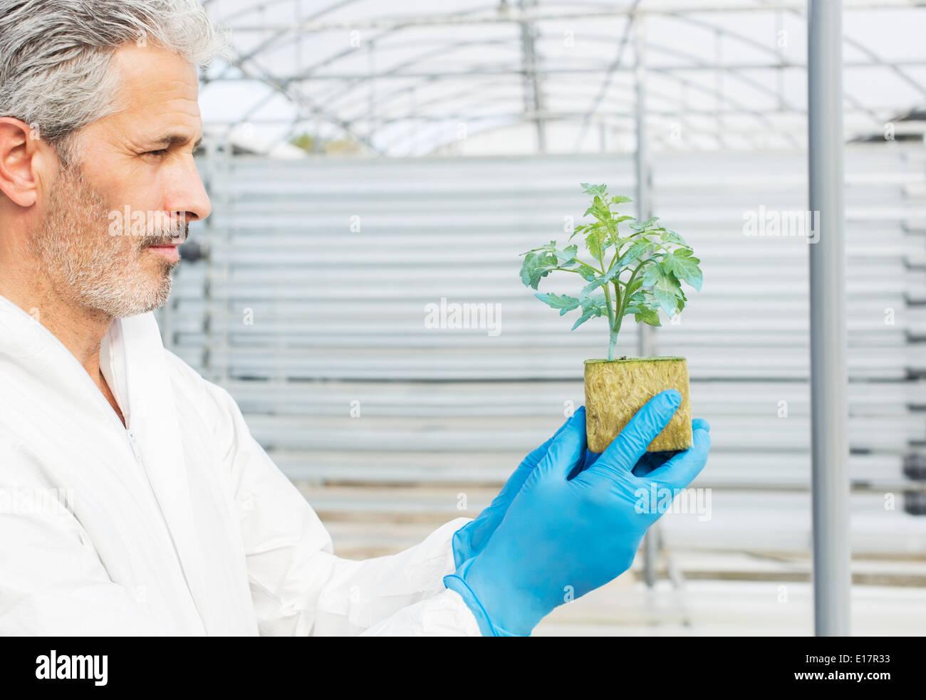 La celebración de planta en invernadero botánico Imagen De Stock