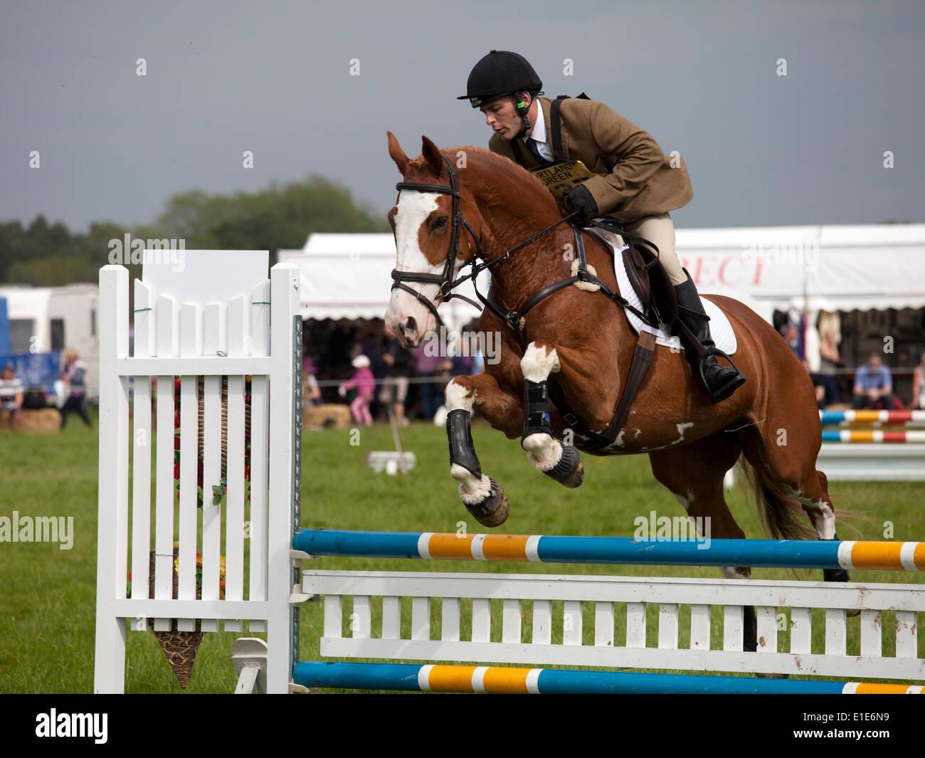Belsay, Reino Unido. Desde el 01 de junio de 2014. Un competidor en la sección show jumping borra un salto Imagen De Stock