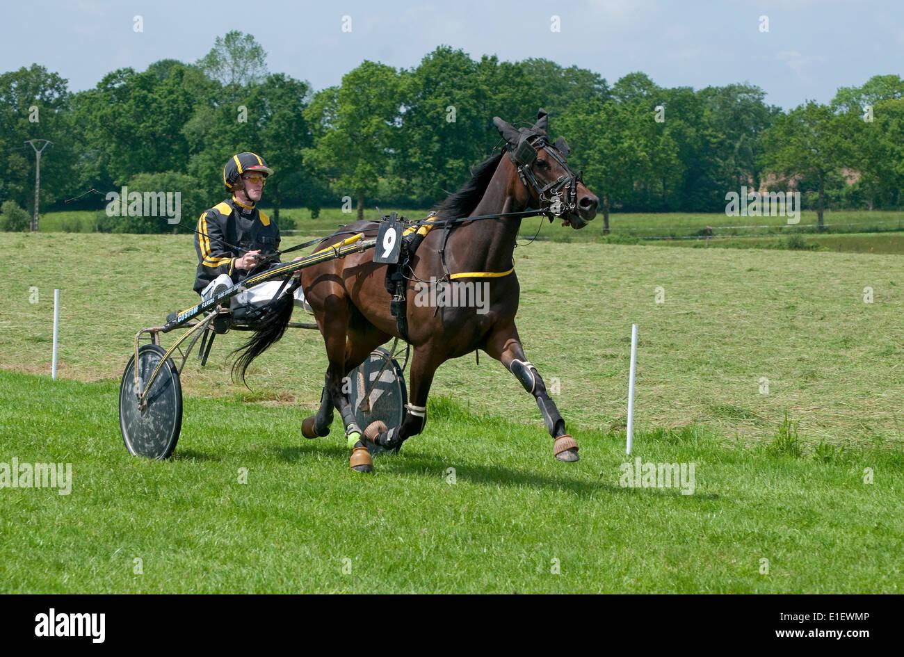 El caballo al trote, bourigny racecourse, Normandía, Francia Imagen De Stock