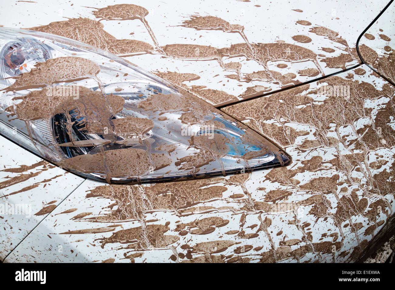 Salpicaduras de barro en el capó de un coche blanco, closeup Imagen De Stock