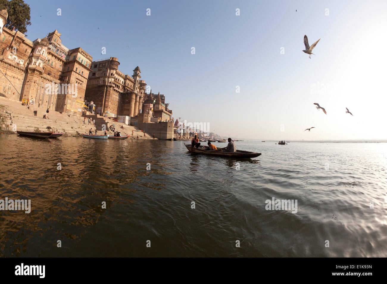 Gaviota sobrevolando el río Ganges en Varanasi. Imagen De Stock