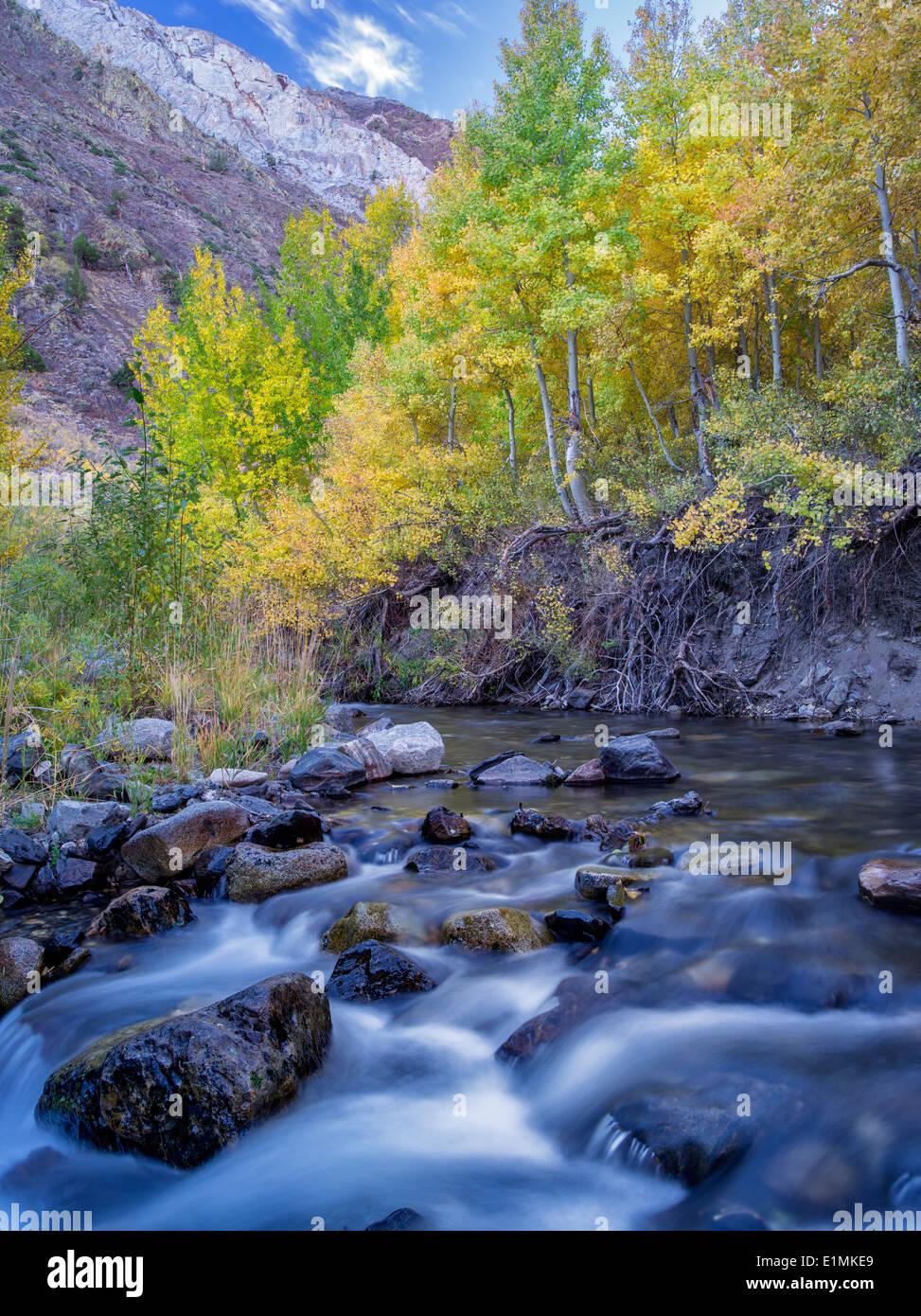 Mcgee Creek y caída aspens coloreado, Inyo National Forest, en la región oriental de Sierra Nevada, California Imagen De Stock
