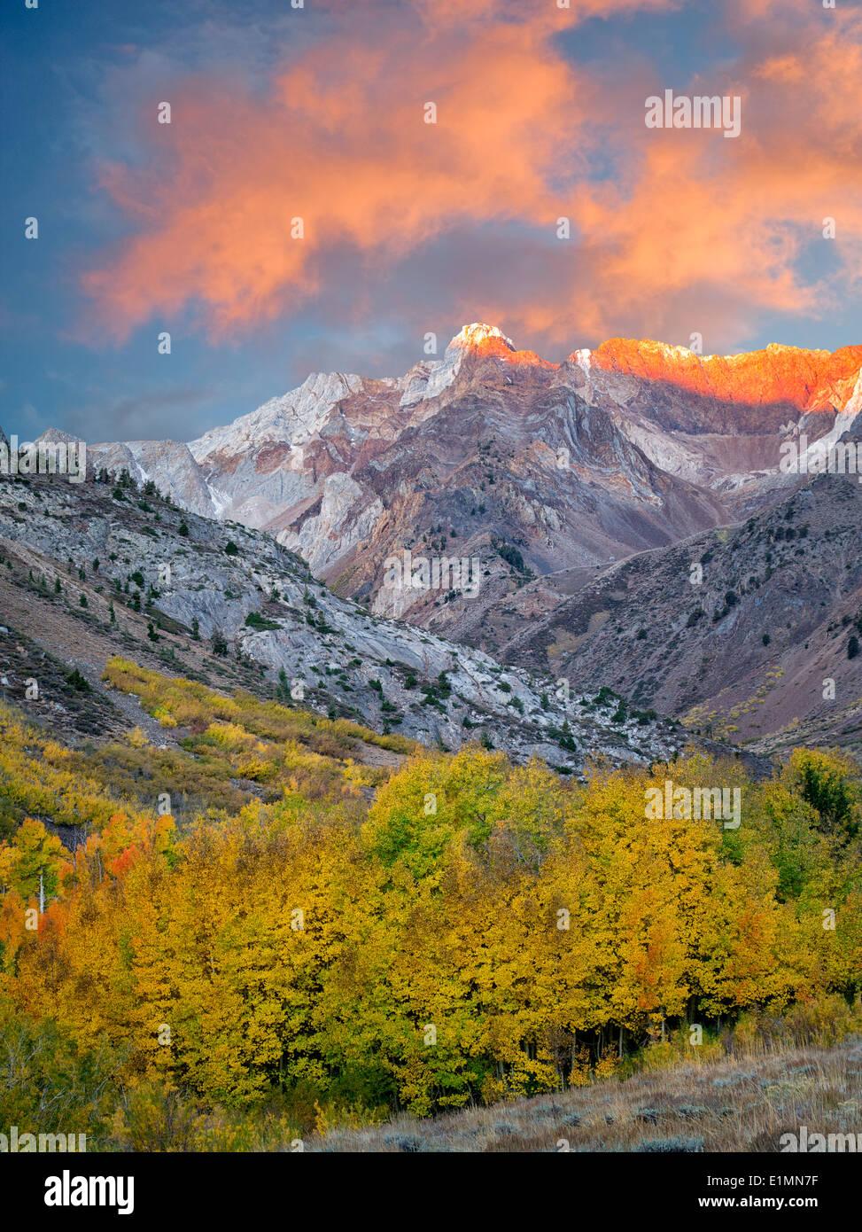 Mcgee Creek con drenaje de color otoño álamos y árboles de Aspen. La parte oriental de Sierra Nevada Mountains, California Imagen De Stock