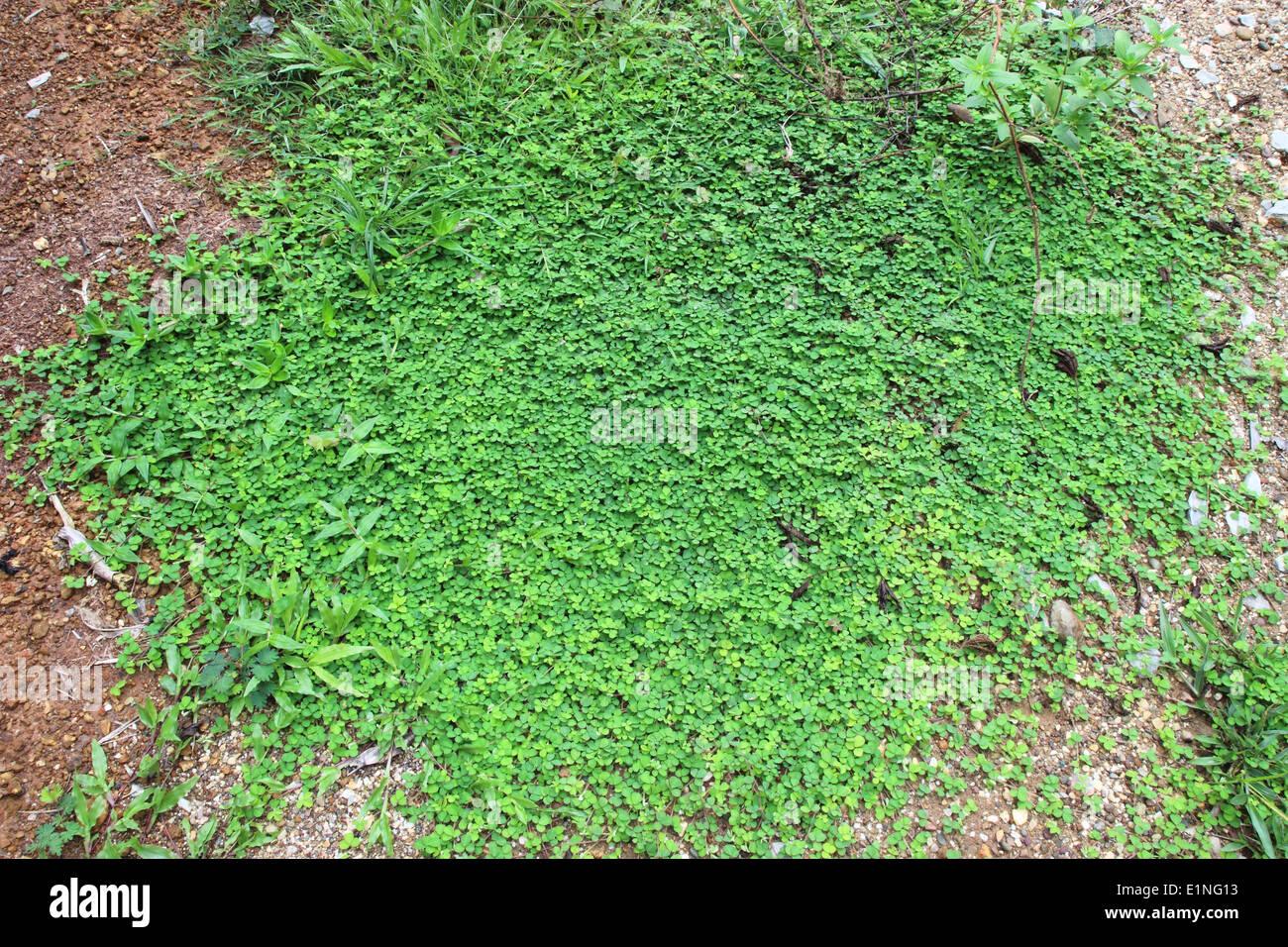 Antecedentes La hierba verde Imagen De Stock