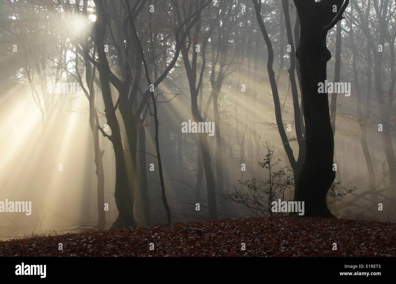 Montículo ancestral prehistórico con rayos de sol en un bosque. Foto de stock