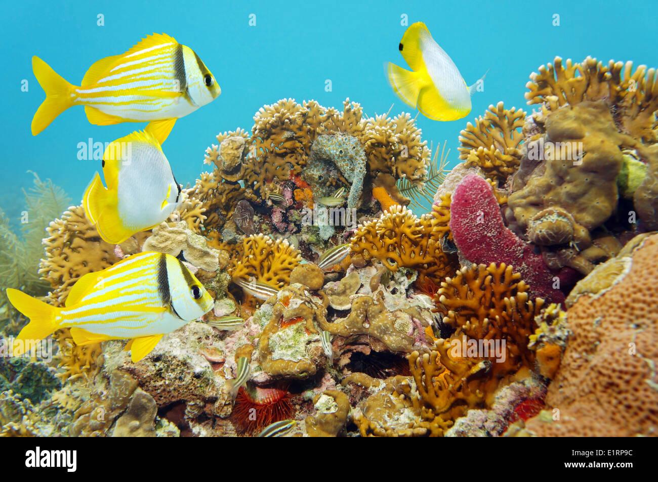 Escena de arrecifes de coral con peces tropicales Imagen De Stock