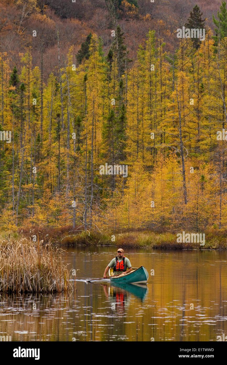 Hombre canoa en palas quietas aguas de pequeña cala en el extremo noroeste del parque Algonquin, Ontario, Canadá. Imagen De Stock
