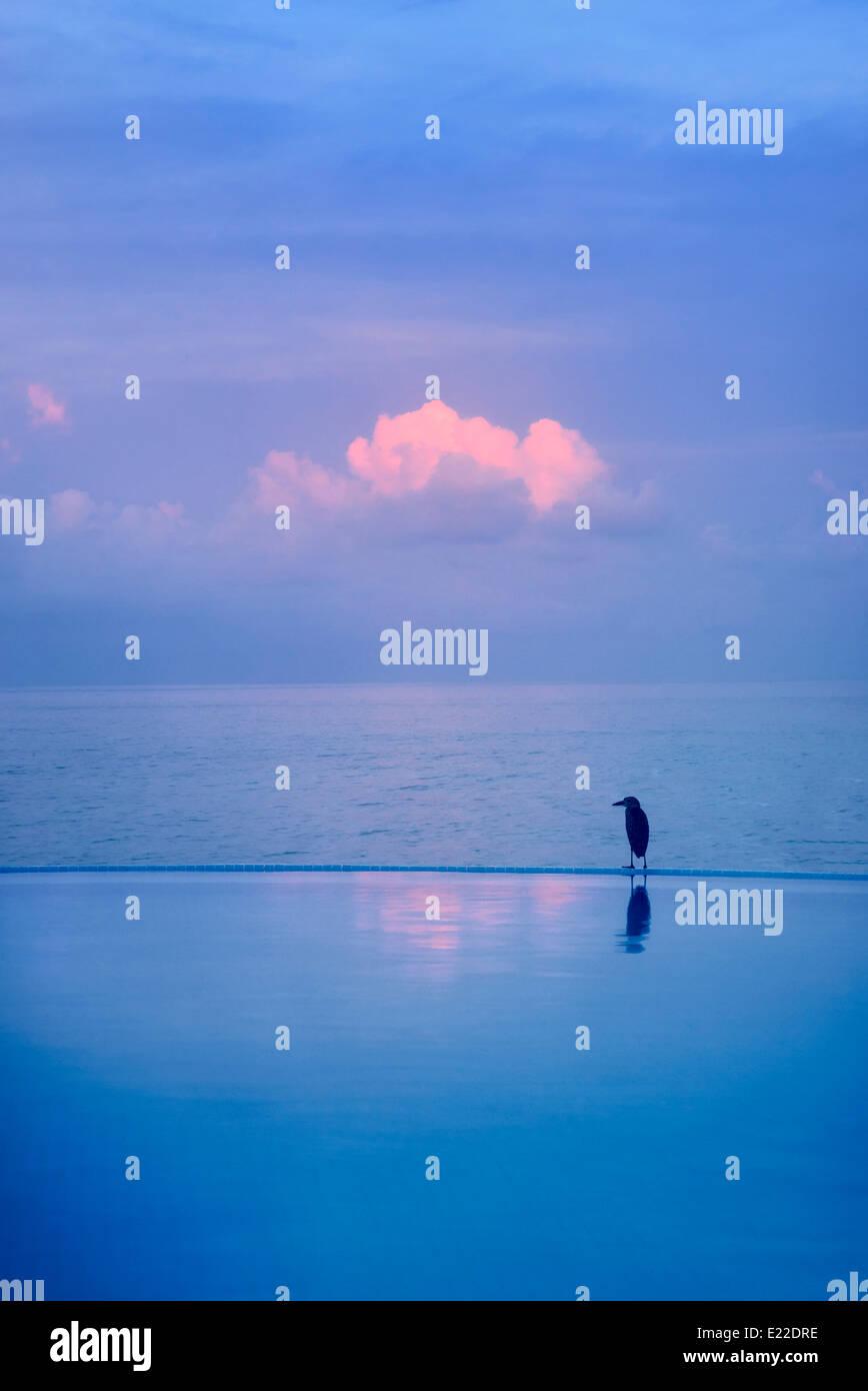 Heron en el borde de la piscina de borde infinito. Punta Mita, México Imagen De Stock
