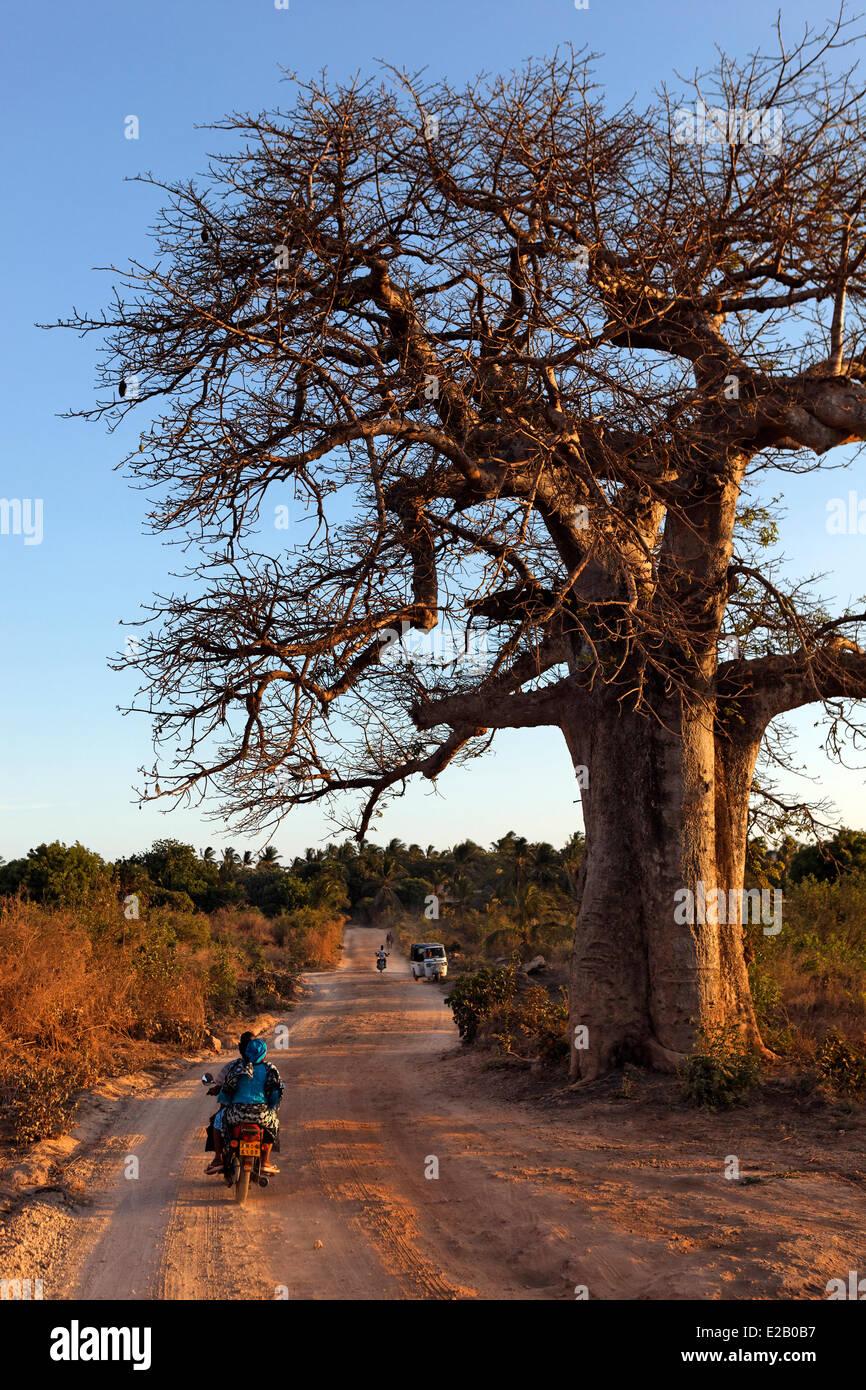 Kenya, distrito de Malindi, baobab Imagen De Stock