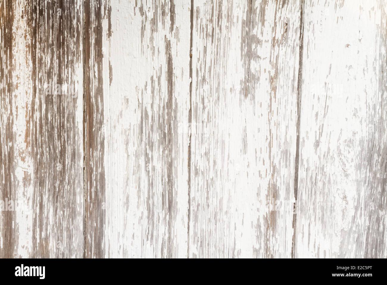 Entre las placas de un viejo cobertizo. Imagen De Stock