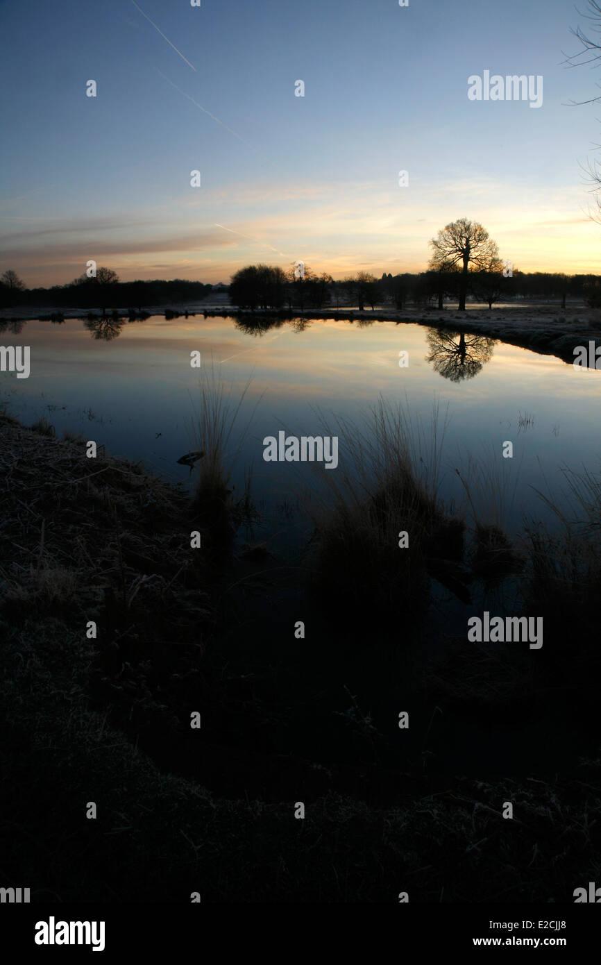 Invierno amanecer sobre la pierna de cordero estanque en Richmond Park, Londres, Reino Unido. Imagen De Stock